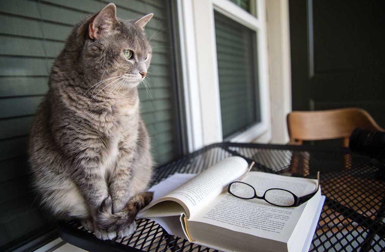 Вспомнить всё, или есть ли у кошек память?
