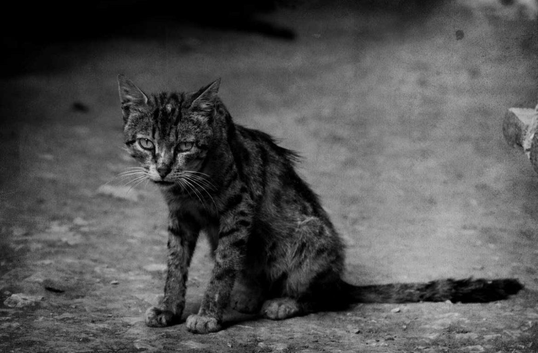 Фото худого кота: норма и патология