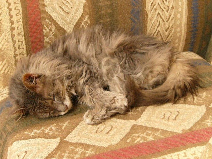 Фото худого кота