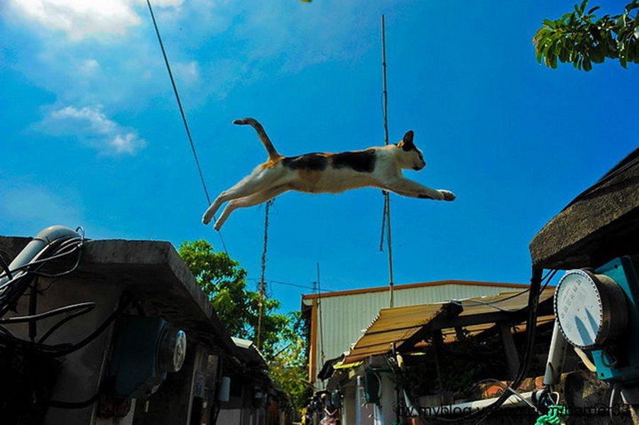 Фото кошек в прыжке