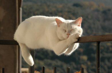 Фото кошки спят