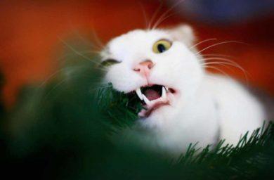 Фото котов с елкой
