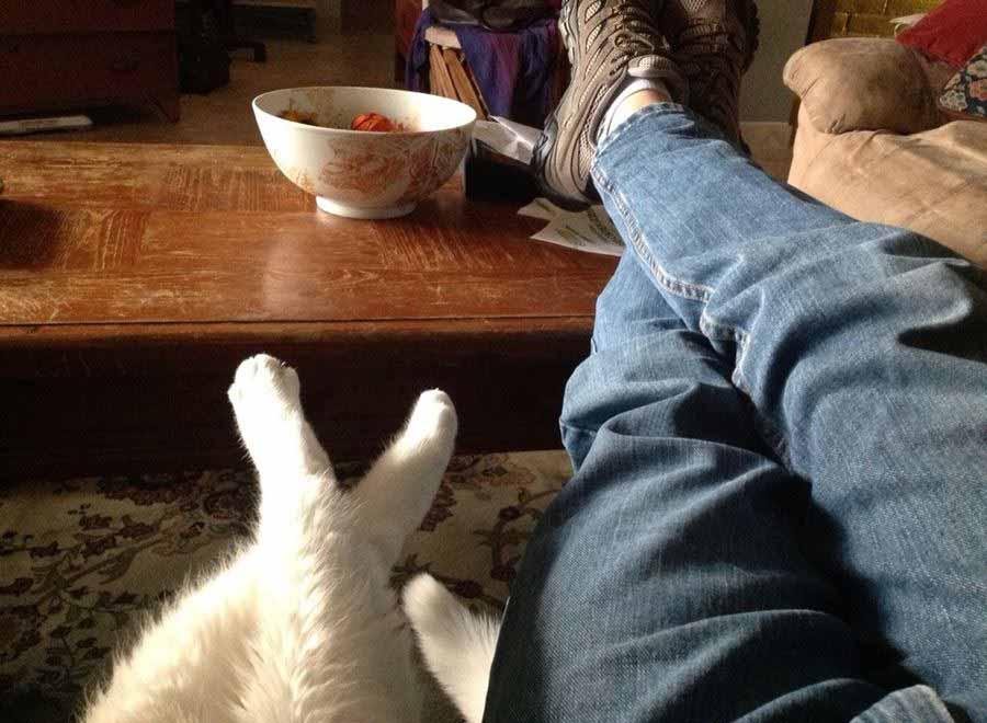 Фото любимых кошек