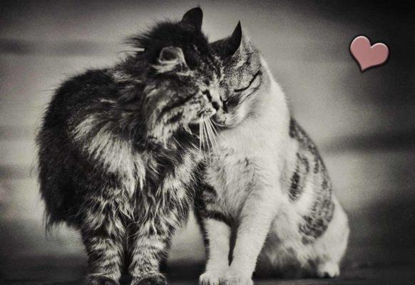 Фото любви кошек
