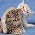 Любовь кошек: фото усатых романтиков