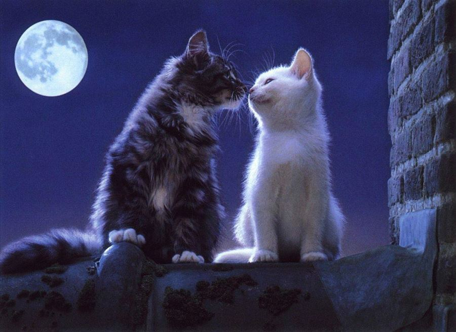 Фото любящих кошек