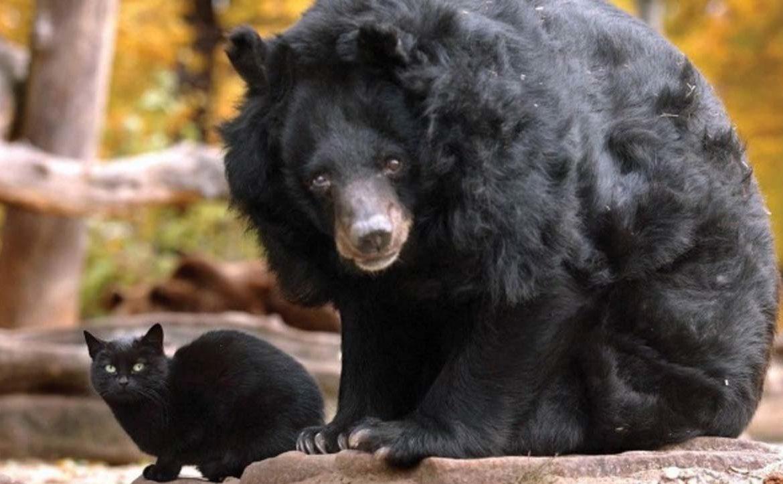 Muschi и Mäuschen: может ли медведь дружить с кошкой?