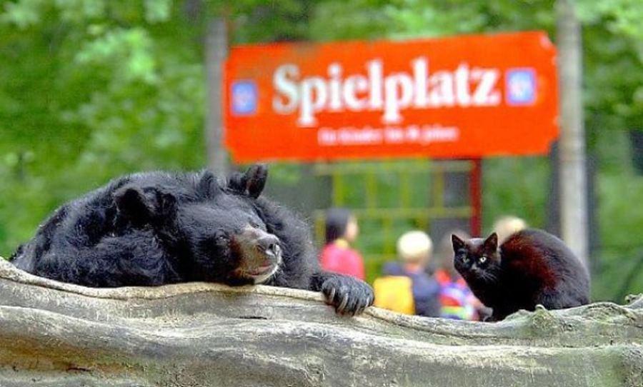 Фото медведя и кошки