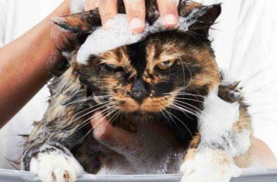 Фото мокрых кошек