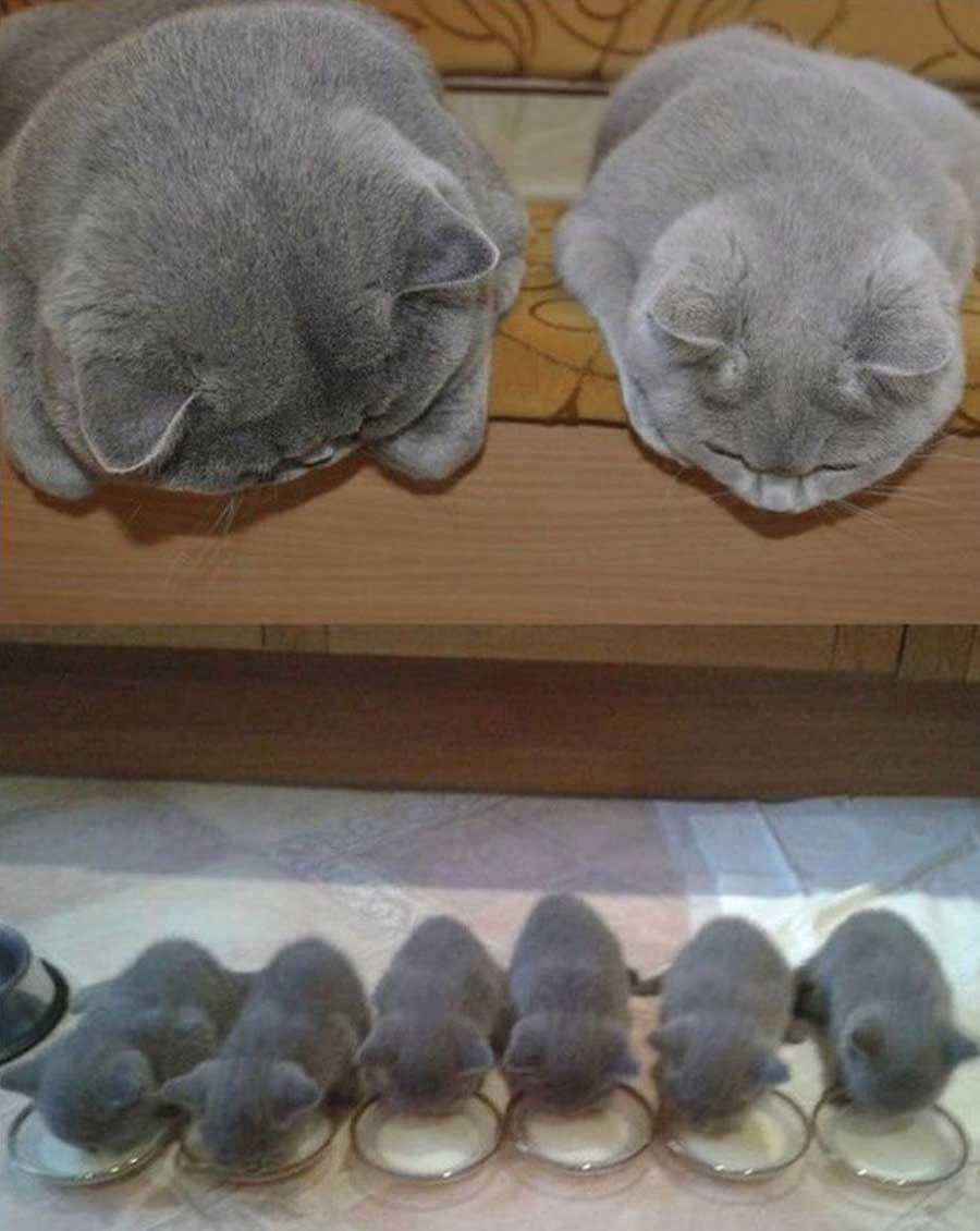 Фото с котами, кошками и котятами