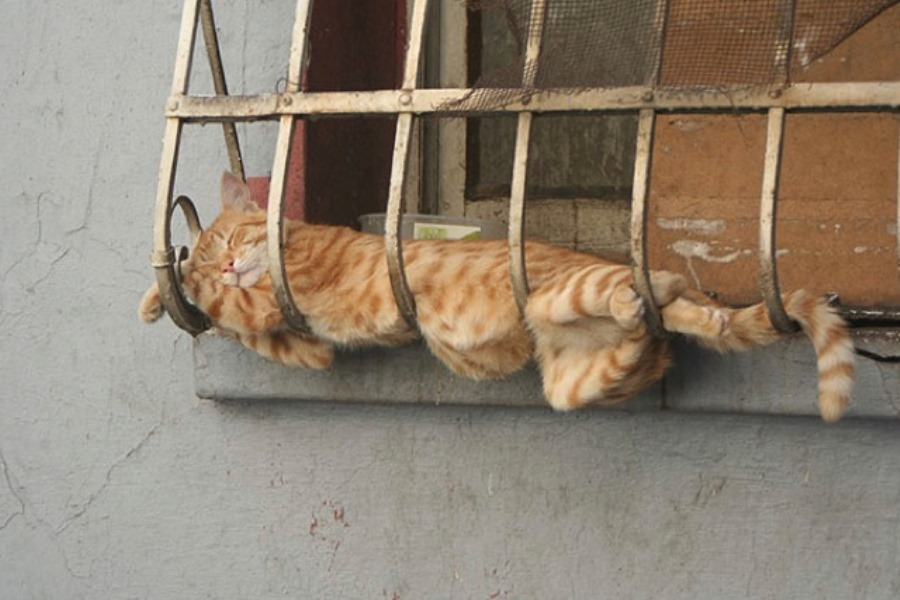 Фото спящего кота
