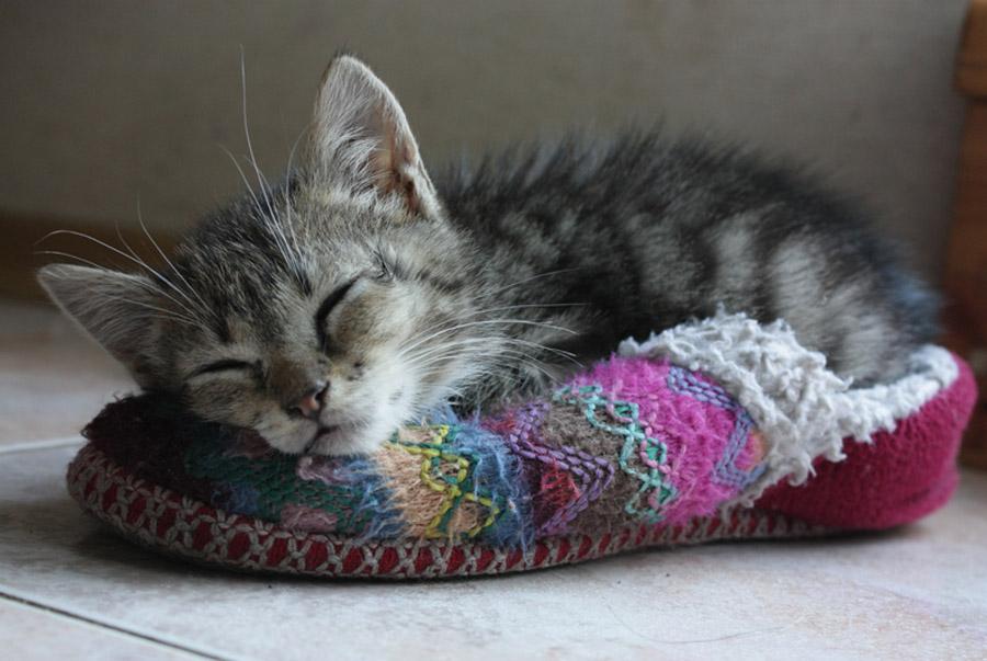Фото спящего котенка