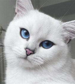 Фотографии кота Коби