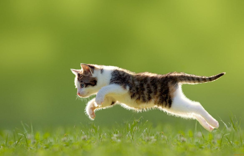 Гармония прыжков и грация кошки: видео