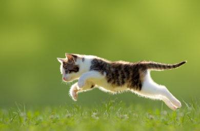 Гармония прыжков и грация кошки