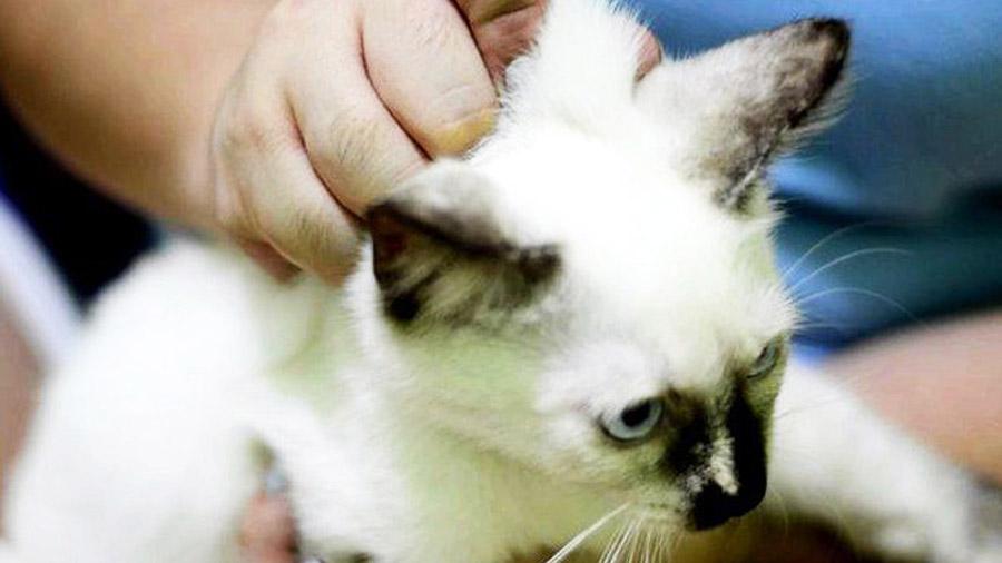 препараты от гельминтов для собак и кошек
