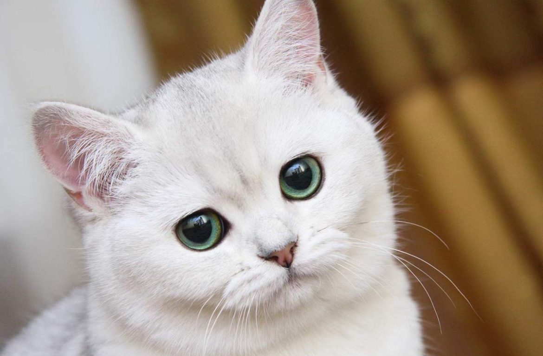 У кота выделения из глаз чихает