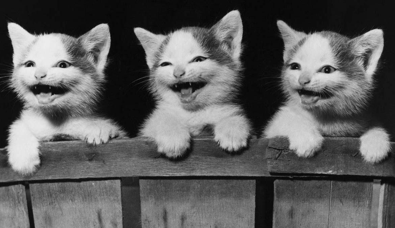 ГОСТ на выращивание котят и щенков
