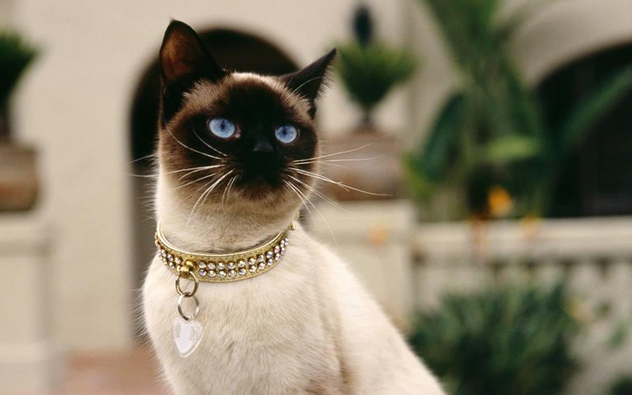 Определить характер кота по окрасу