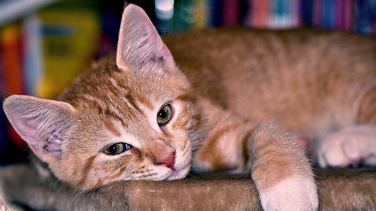 Худая кошка, что делать