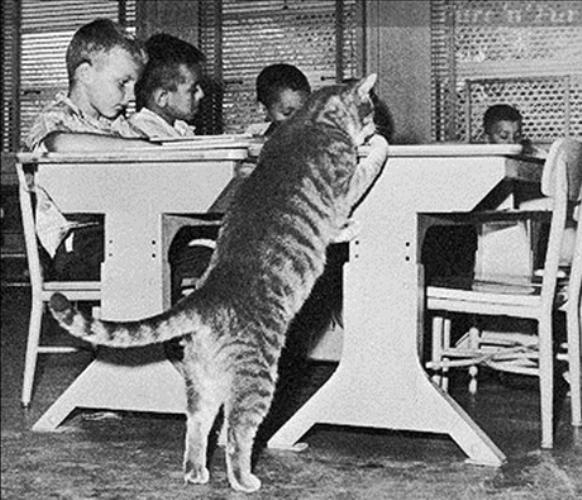 Имена котов известных людей