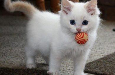 Охотничий инстинкт у котят