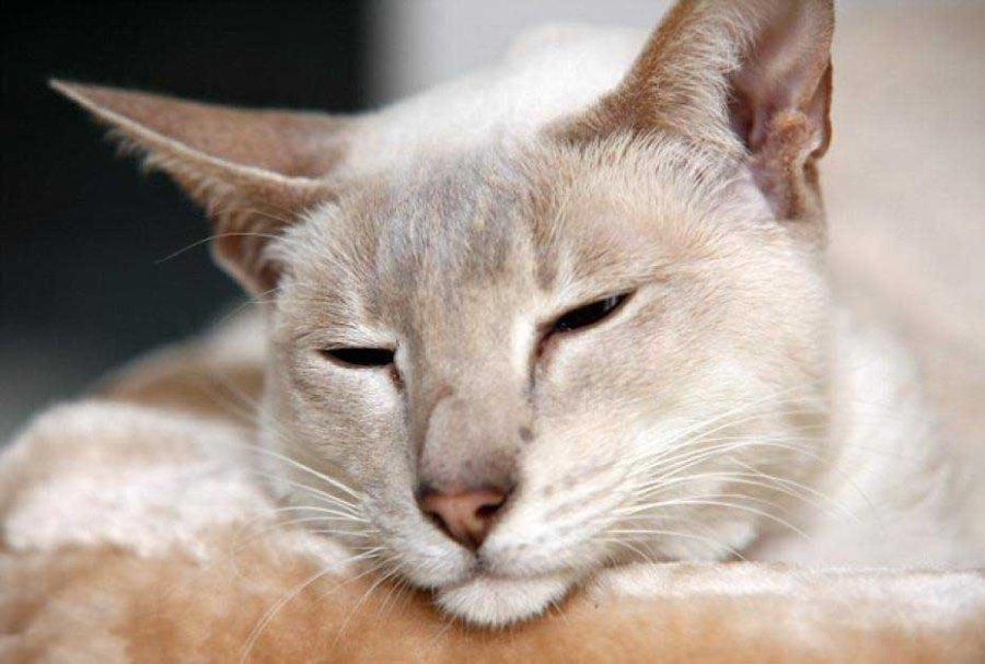 Истории выживших кошек