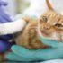 Безболезненное усыпление кошки