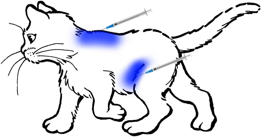 Как сделать укол котенку в холку