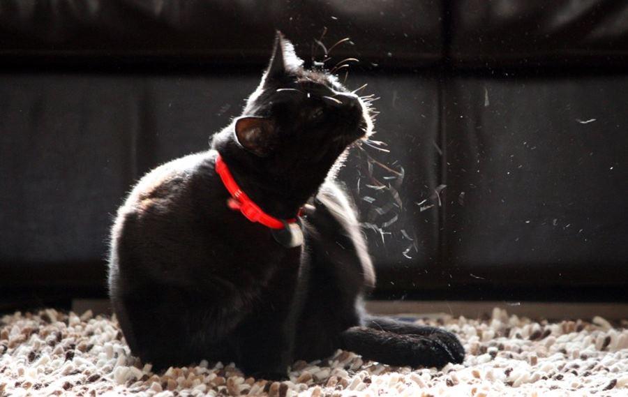 Как домашнюю кошку вывезти на дачу