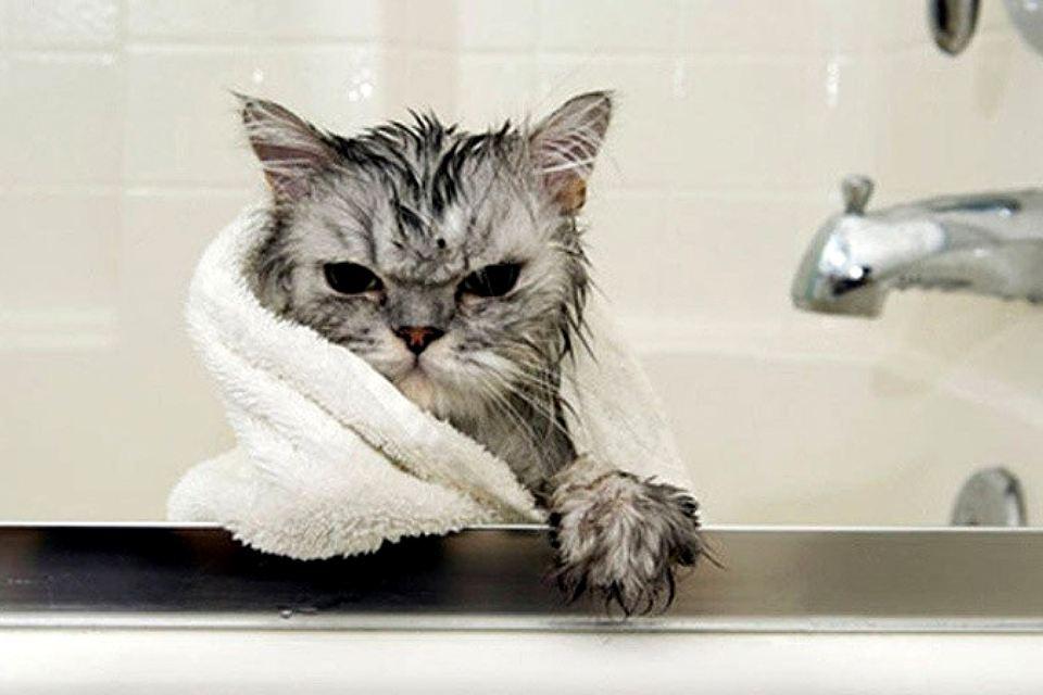Как искупать кота если он боится