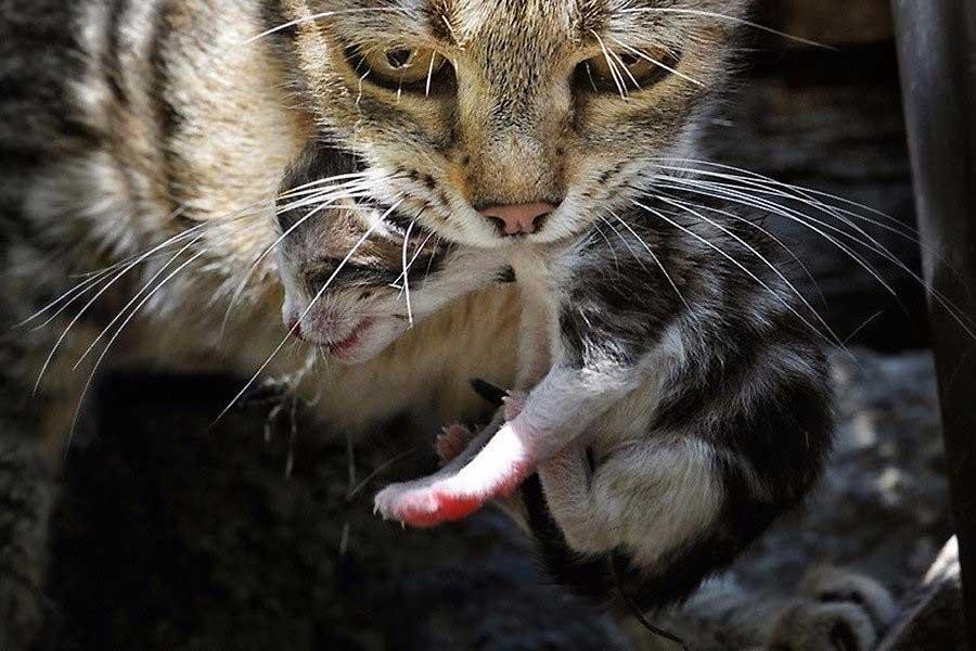 Как колоть котенка в холку
