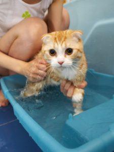 Как купать кота который боится воды