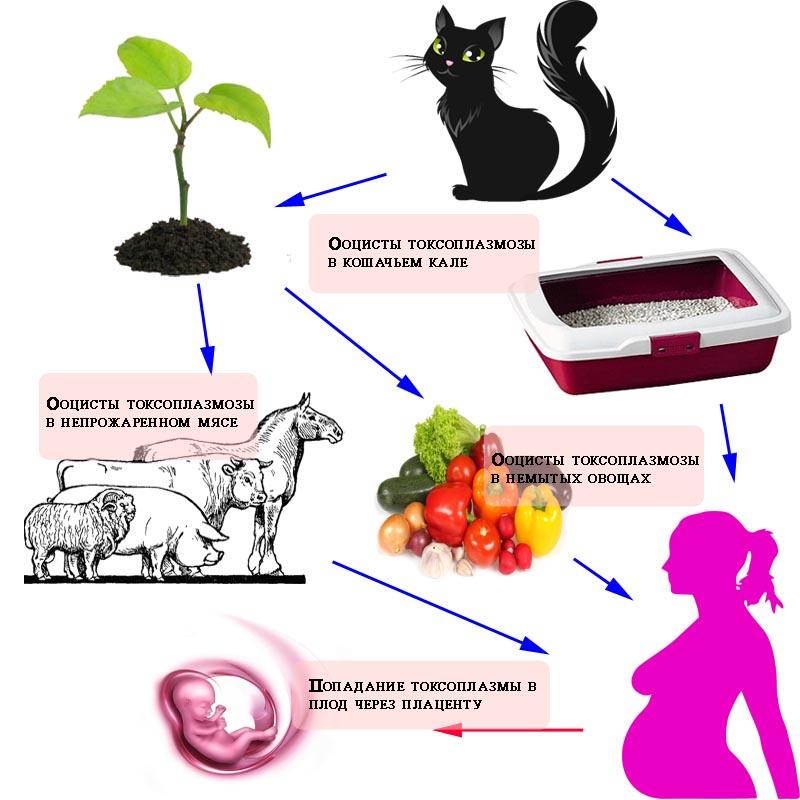 организм хозяина как среда обитания паразита