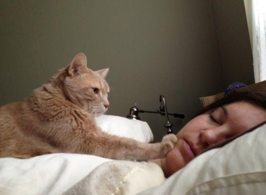 Как мыслят кошки