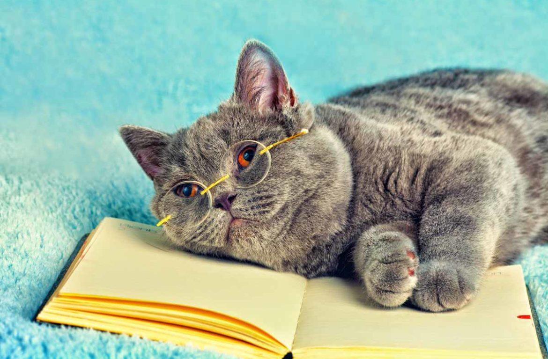 Как мыслят кошки: секреты манипуляции