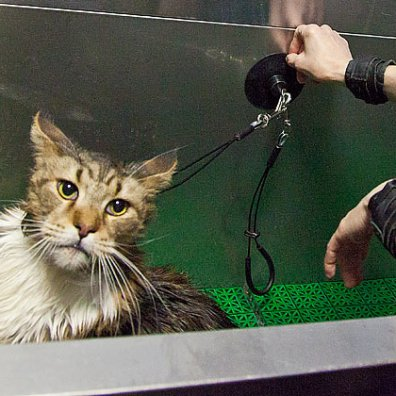 Приспособление для мытья кошек