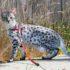 Как надеть шлейку на кошку: пошаговая фото инструкция