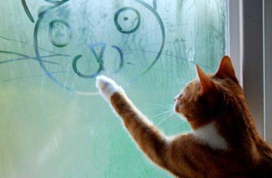 Как поэтапно нарисовать кошку