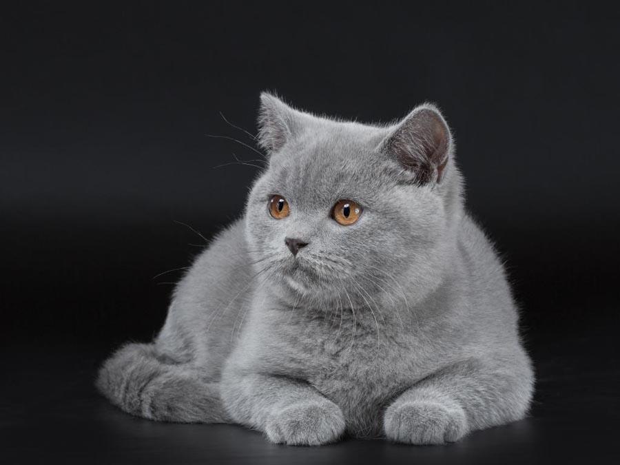 Прикольные имена для котов мальчиков серых