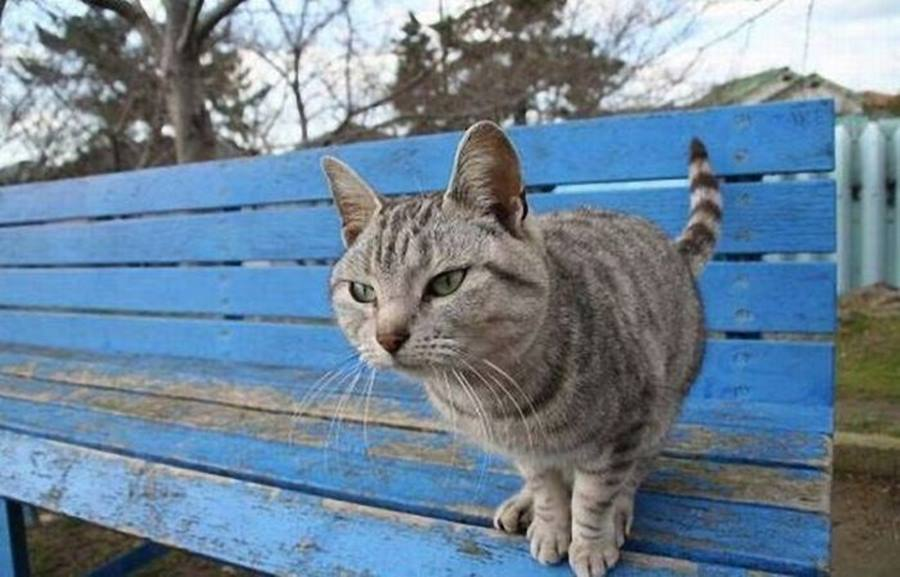 Как определить характер кошки