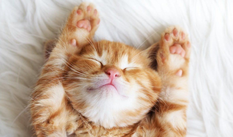 Как определить характер кошки заранее?