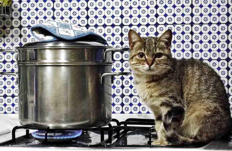 Правила кухни: как отучить кошку лазить на стол