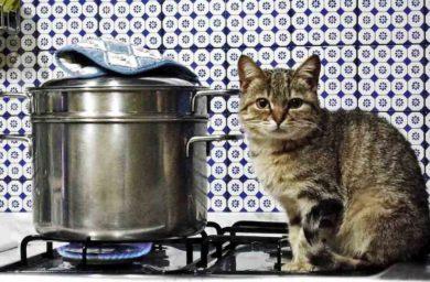 Как отучить кошку лазить по столам: видео