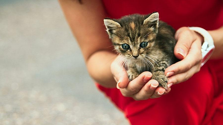 Как передается лишай от кошки к человеку