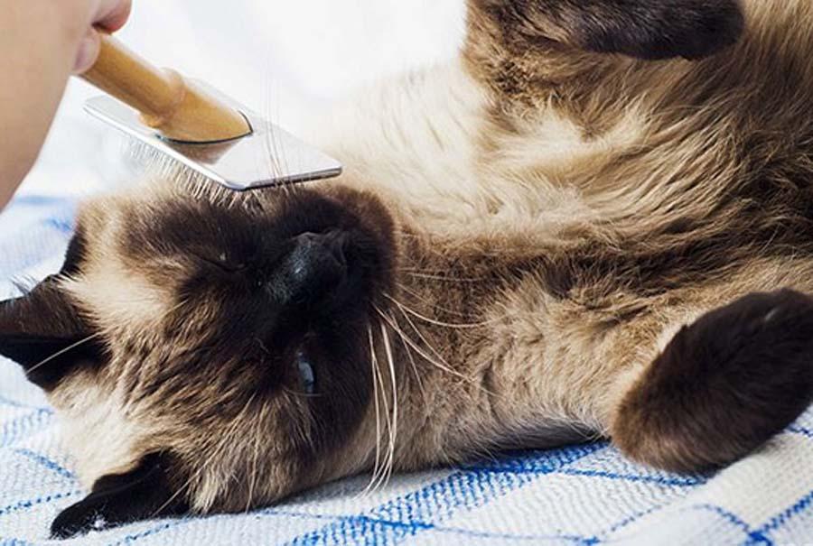 как познакомить кошек подружить