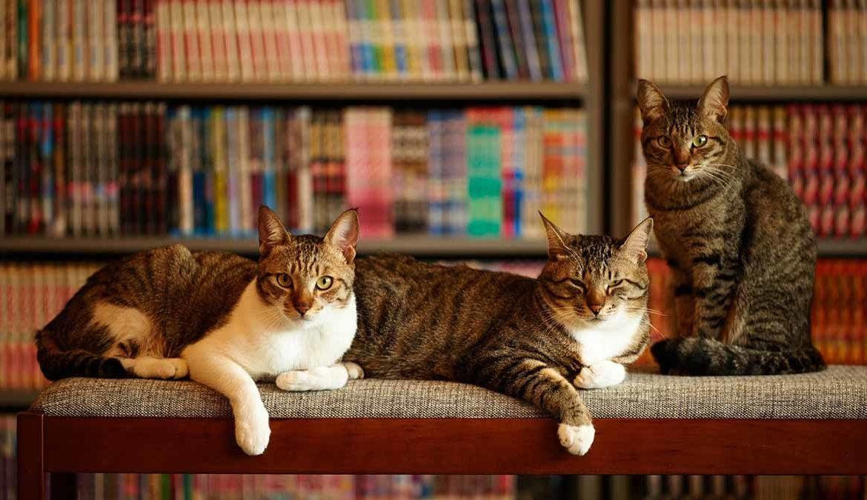 Как подружить котов между собой в квартире