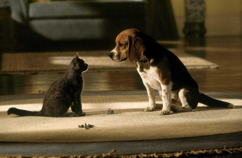 Взрослая собака и взрослый кот