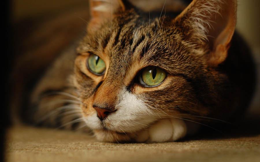 Как понять, что у кота болит желудок