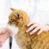 Как дать лекарство кошке?